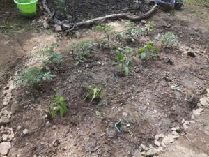 Shirley's Garden in March