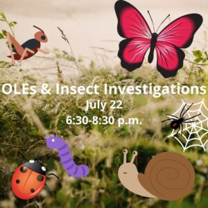 Connecting Outdoor Learning Environments with Insect Investigations @ The Children's Center